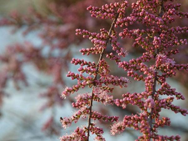 Весенняя Болгария - цветущая и пустынная / Фото из Болгарии