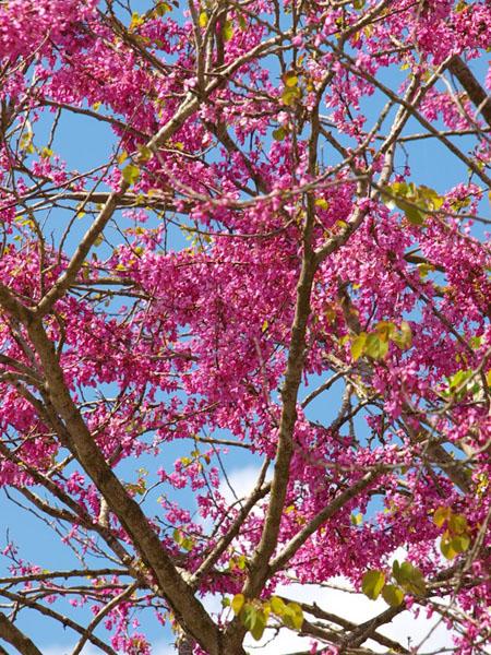 Яркие цветы в Болгарии весной - на каждом шагу / Фото из Болгарии