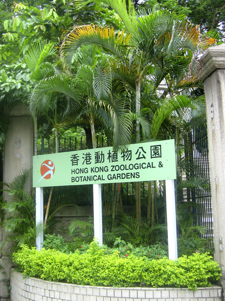 Ботанический сад в Гонконге / Фото из Гонконга