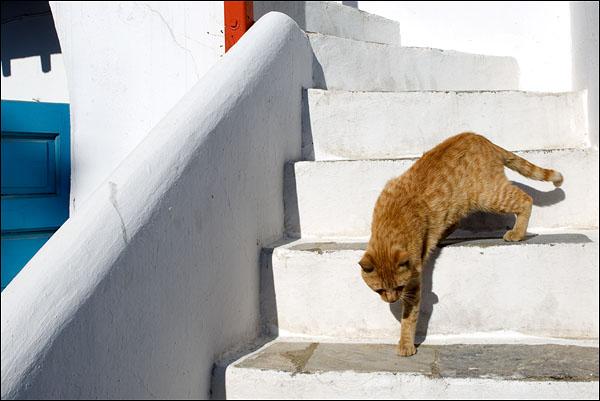 Рыжий кот на острове Миконос / Фото из Греции
