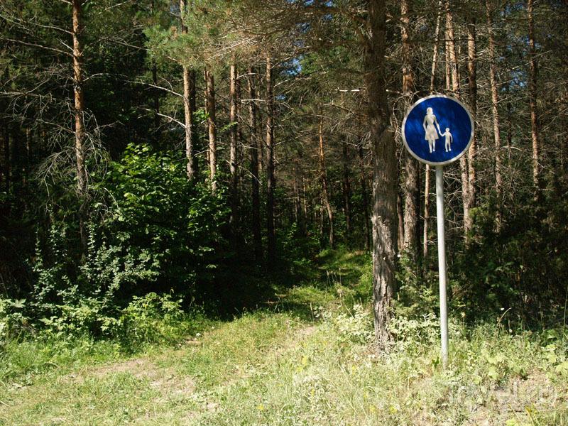Лес на острове Муху / Фото из Эстонии