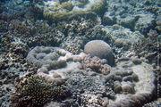 Из подводной лодки / Австралия
