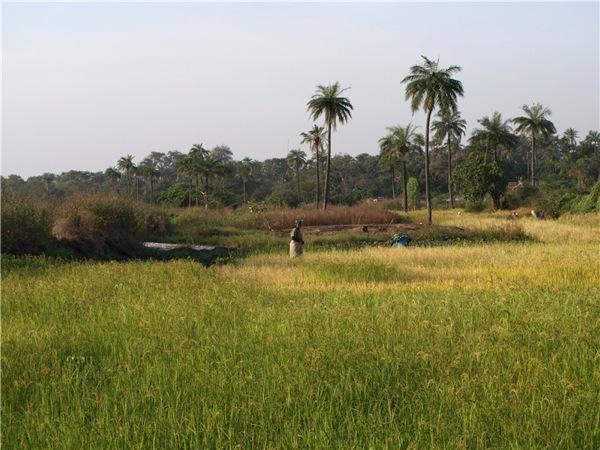 Гамбия - маленькая и интересная страна / Фото из Гамбии