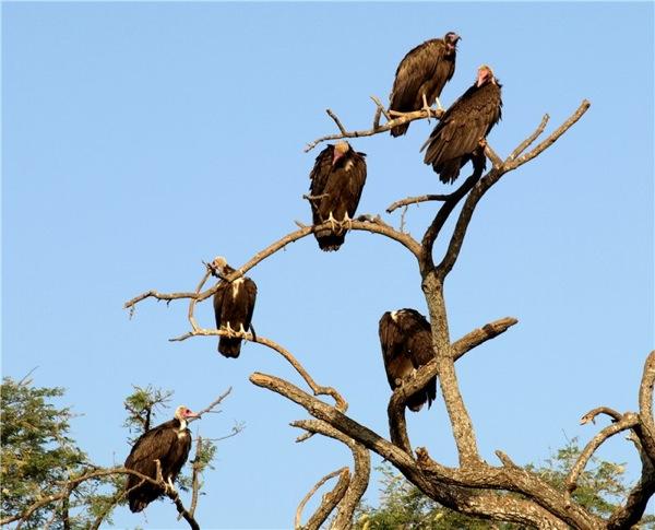 Животный мир Гамбии уступает восточной Африке / Фото из Гамбии