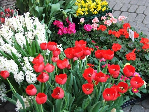 Уличный магазинчик с цветами на Кёнигштрассе, Нюрнберг / Фото из Германии