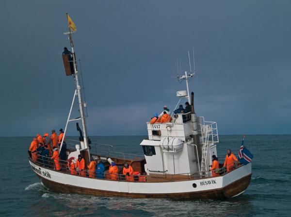 Судно с туристами, наблюдающими за китами / Фото из Исландии