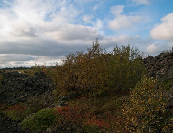 Разноцветная осенняя листва в парке Dimmuborgir  / Фото из Исландии