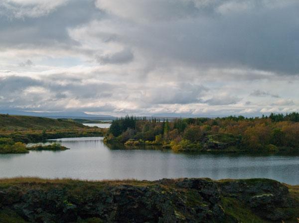 Лес посреди озера Миватн  / Фото из Исландии