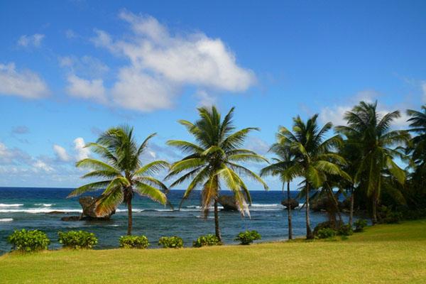 Побережье Барбадоса / Фото с Барбадоса