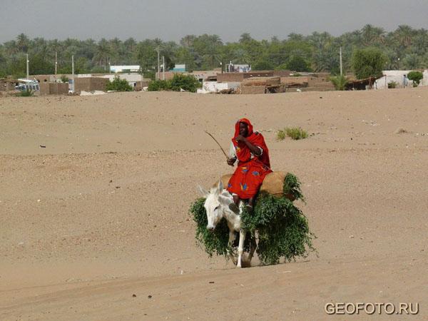 Местная жительница в долине Нила у Керимы / Фото из Судана