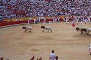 Первые быки / Испания