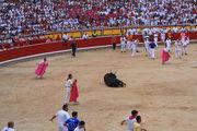 У быков накапливается усталость / Испания