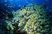 Богатая подводная фауна / Россия
