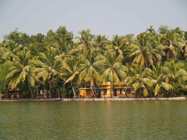 Пальмовый берег канала, Керала / Фото из Индии