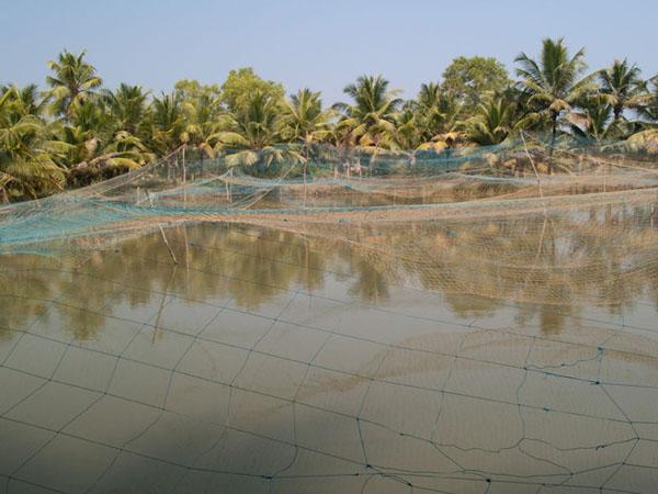 Рыбное озеро на острове Munroe / Фото из Индии
