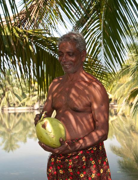 Свежий кокос готов к употреблению / Фото из Индии