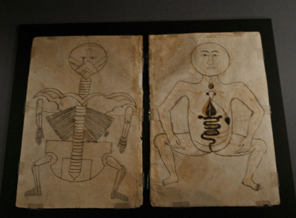Анатомия человека, музей арабского искусства / Фото из Индии