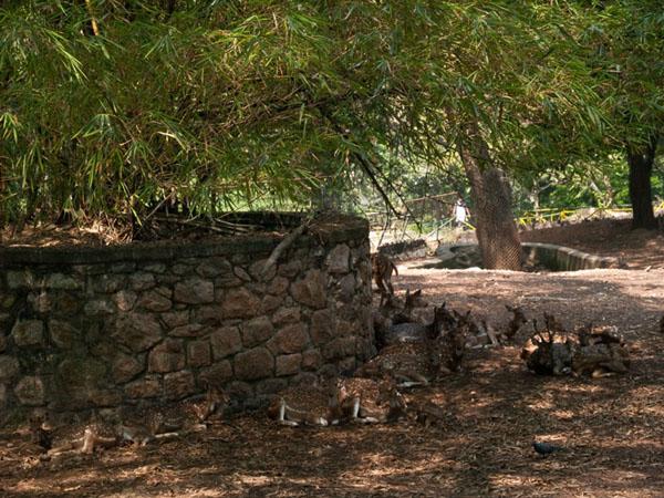 Вольер с оленями, зоопарк Тривандрума / Фото из Индии