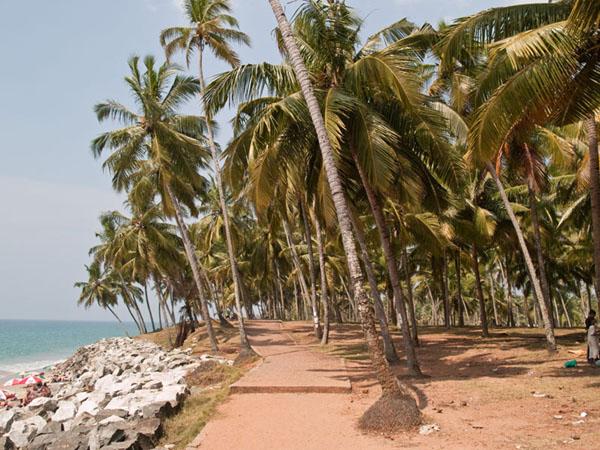 Пальмовая роща и каменный вал у северного пляжа, Варкала / Фото из Индии