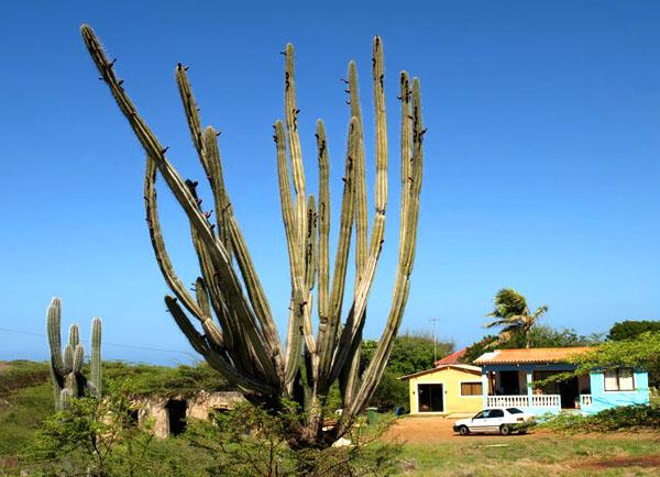 Сельская местность Кюрасао / Фото с Кюрасао