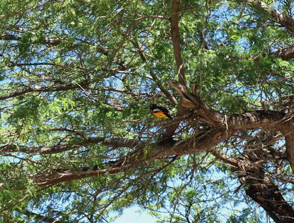 Птица на Кюрасао / Фото с Кюрасао