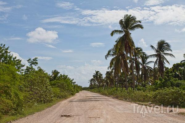 Типичный пейзаж Барбуды / Фото из Антигуа и Барбуды