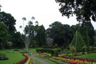 Королевский ботанический сад / Шри-Ланка