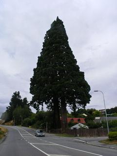 Флора / Новая Зеландия