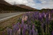 Дорога / Новая Зеландия