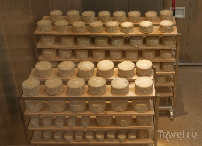 Готовый сыр сушится перед продажей, Erlebnis Sennerei Zillertal / Фото из Австрии