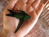 Жалко птичку / Гондурас