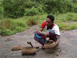 Заклинатель змей / Шри-Ланка