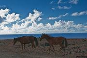 На острове полно диких лошадей / Чили