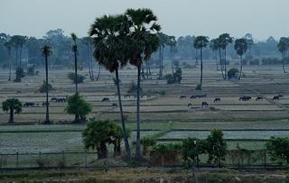 Крокор / Камбоджа