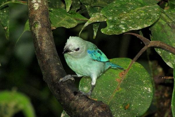 Птица в Ясуни / Фото из Эквадора
