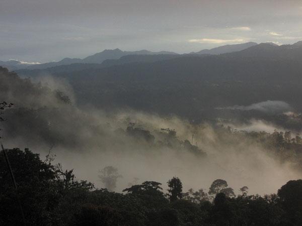 Облачные леса в Эквадоре / Фото из Эквадора