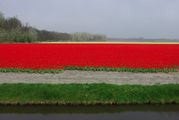 Гектары тюльпанов / Нидерланды