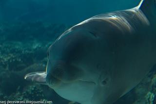 Улыбающийся дельфин / США