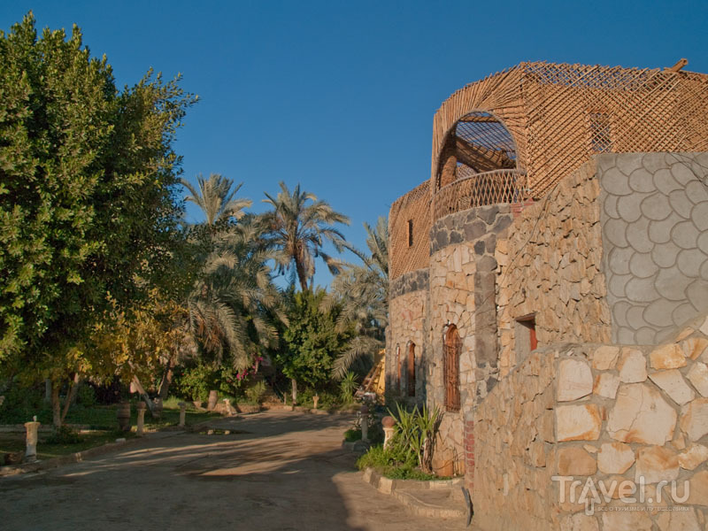 На территории отеля Old Oasis, Бавити / Фото из Египта