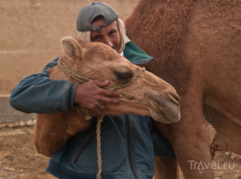 На верблюжьей ферме Abu Noss, Фарафра / Фото из Египта