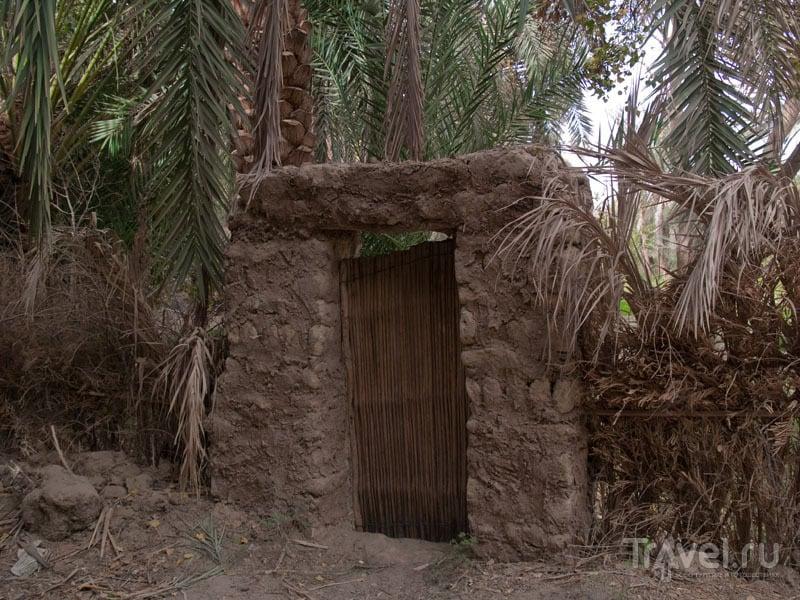 Участки в пальмовом саду в оазисе Фарафра / Фото из Египта
