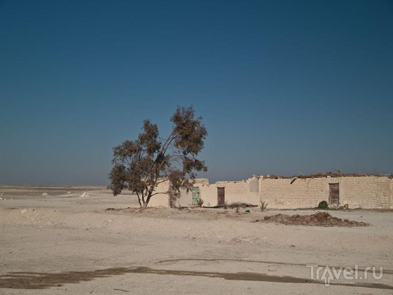 Виды оазиса Фарафра / Фото из Египта