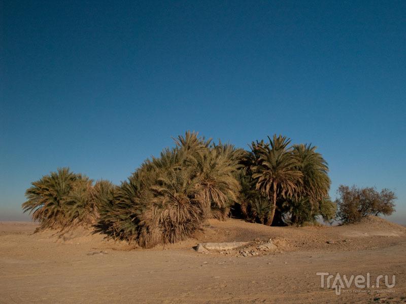 Оазис Айн-Хадра (Ain Khadra) в Белой пустыне / Фото из Египта