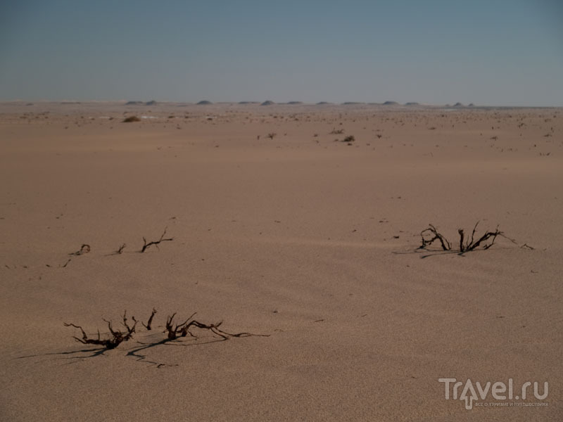 Исчезнувший лес в пустыне / Фото из Египта