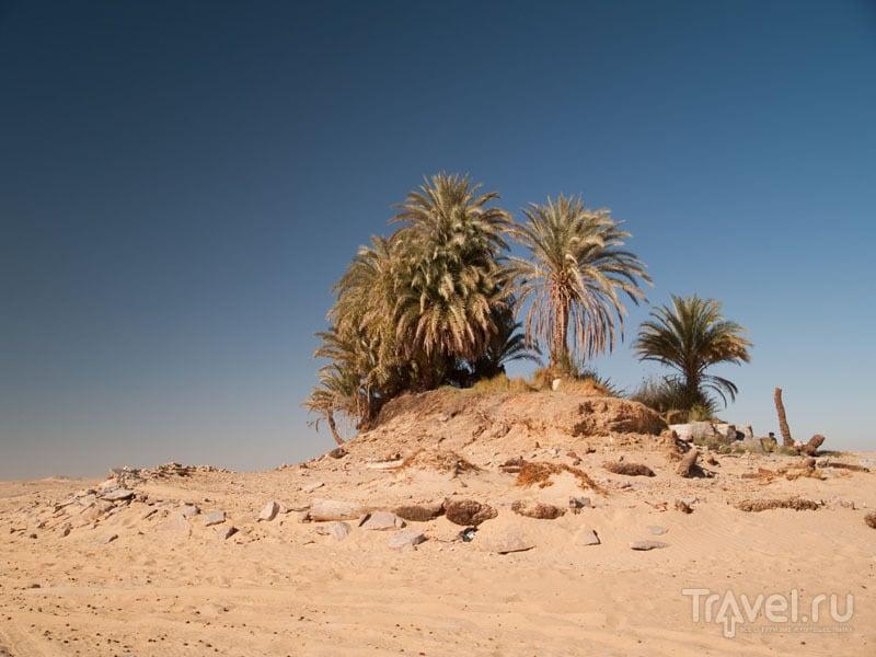 В оазисе Айн-эль-Серв (Ain-el-Serw) / Фото из Египта