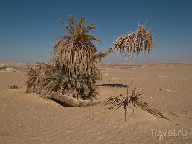 Оазис в пустыне, Египет / Фото из Египта