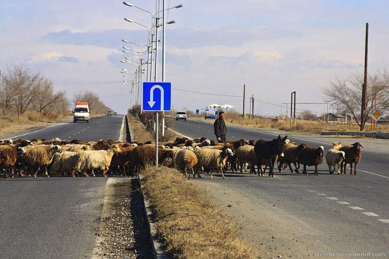 Бараны переходят дорогу / Фото из Армении