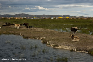 Немного озерных домашних животных / Перу