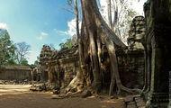 Толстые корни оплетают стену / Камбоджа