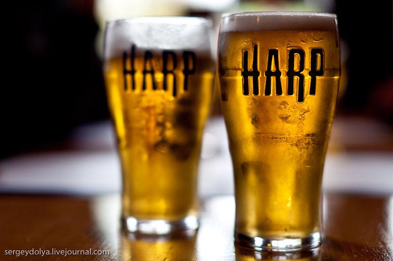 "Ирландский лагер ""Харп"" / Фото из Ирландии"
